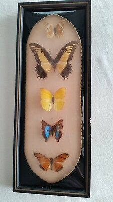Vintage Framed Matted 5 Butterfly Collection Bubble Glass