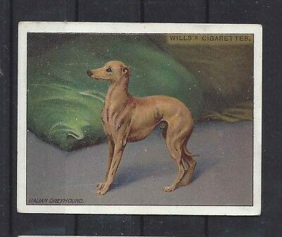1915 OriginaL UK Wardle Dog Art Study Wills Cigarette Card ITALIAN GREYHOUND