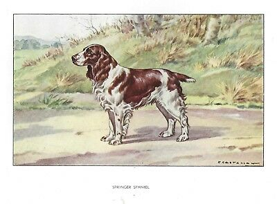 1930 Art Francois Castellan France Dog Watercolor Print ENGLISH SPRINGER SPANIEL