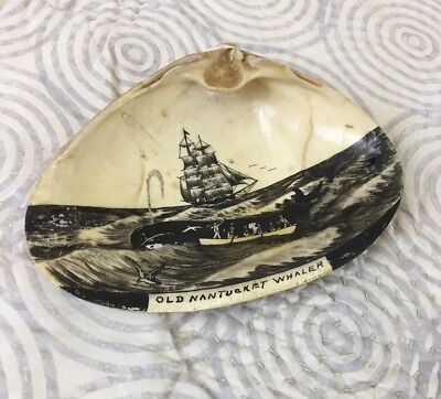 "Original Scrimshaw Whale Clipper Clamshell ""Old Nantucket Whaler"""