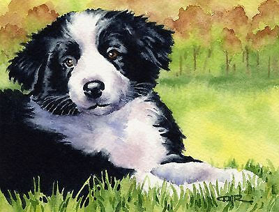 BORDER COLLIE PUPPY Dog Watercolor 8 x 10 ART Print Signed by Artist DJR