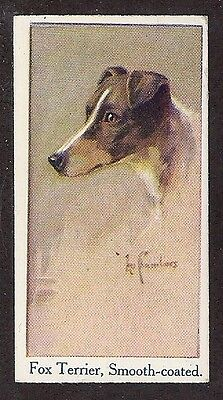1924 UK Leo Chambers Dog Art Study Moustafa Cigarette Card SMOOTH FOX TERRIER