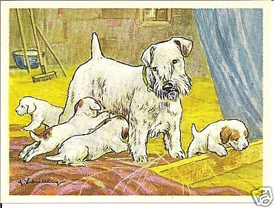 1952 Dog Art Print Austria Tobacco Company Bildwerk Card SEALYHAM TERRIER & Pups