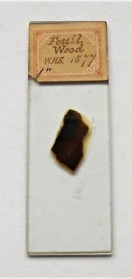Antique   MICROSCOPE SLIDE  of   FOSSIL  WOOD