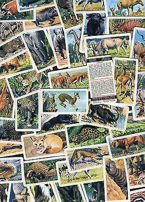 "Brooke Bond Canada Tea 1964 Set Of 48 ""african Animals"" Trade Cards"