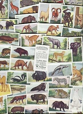 "Nielson's Confectionery 1954 Set Of 50 ""interesting Animals"" Trade Cards"