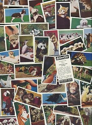"Harden Bros & Lindsay Tea 1961 Set Of 50 ""national Pets"" Trade Cards"