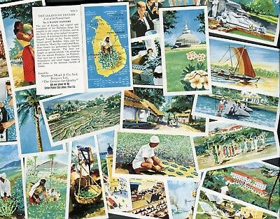 "Seymour Mead Tea 1955 Set Of 24 ""the Island Of Ceylon"" Trade Cards"