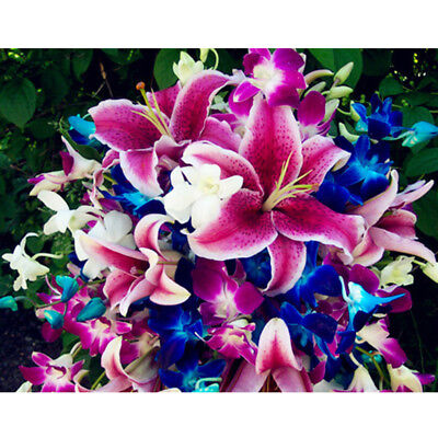 50Pcs Beautiful Mixed Color Lily Flower Seeds Home Garden Yard Plant Ornament Ar
