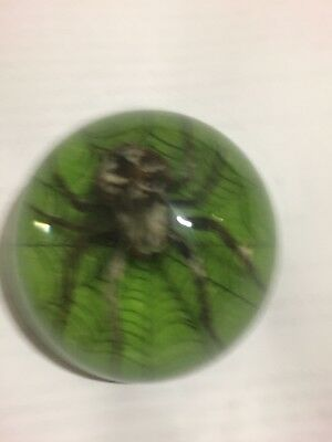 Real Spider Paperweight Last One green font color