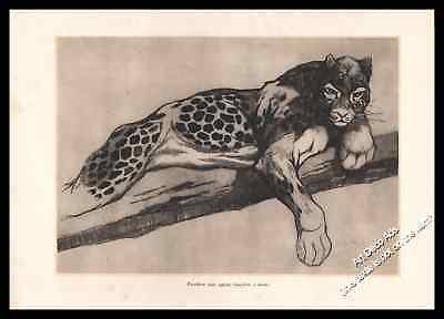 1930 Panthère aux aguets , Panther on the lookout