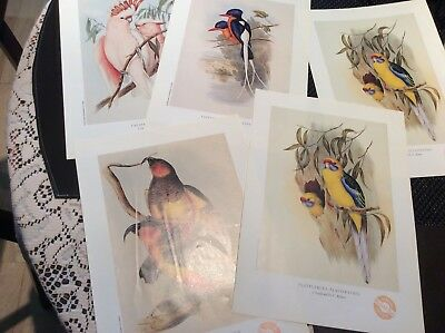 5 Gould Prints Herald Sun Great Condition