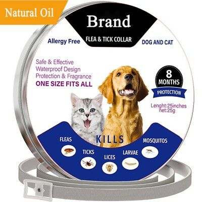 Adjustable Pet Anti Flea and Tick Neck Collar for Dogs Cat 8Month