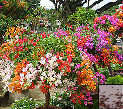 Annual 0.5g seeds from bonsai_seeds - BALCONY FLOWER MIX #11291