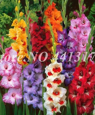 Flowers Orchid Seed 100pcs Striped Garden Novel Plants Bonsai For Home Courtyard