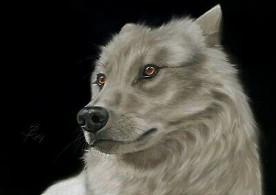 Wildlife arctic Wolf white Portrait Pastell Gemälde Painting Art by WuH