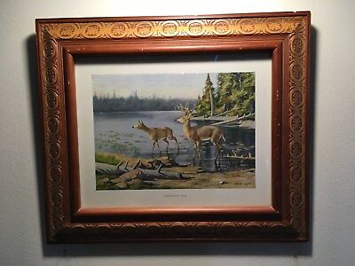 1910 Framed Antique Color Lithograph, Adirondack Deer, by Oliver Kemp, Classic!!
