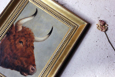 Antique 19thC English School Study of a Red Poll Bull / Ox