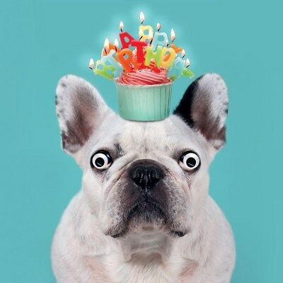 FRENCH BULLDOG BIRTHDAY Card Happy Birthday Cupcake & Candles 3D Goggly  Eyes NEW