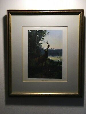 Framed Antique Color Lithograph of Wapiti or Elk,Overlooking Woodland Lake Scene