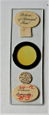 Antique   MICROSCOPE SLIDE by  WHEELER of  POLLEN of PORTUGAL PINE