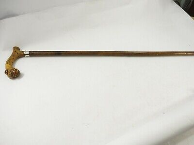 "Antique Bulldog Handle Root Cane Walking Stick 35"" 19th century"