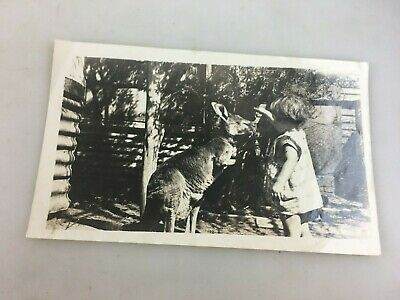 Vintage Photograph - B & W - Little Girl Feeding A Kangaroo