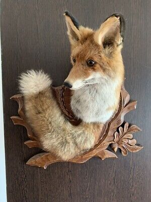 Taxidermy Fox Wall Mounted On Hand Carved Wood