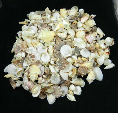 Shell Lot 5 Pounds Of Mixed Clams Scallops Conch Snails Sea Shells Seashells