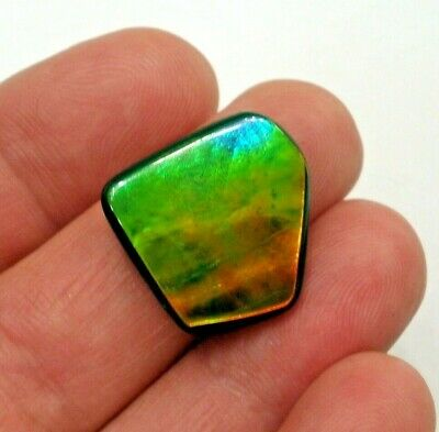 Beautiful Canadian Ammolite Gemstone, Red, Green and Blue Broadflash