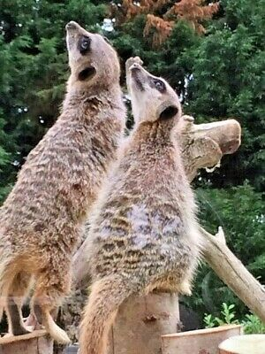 CHESSINGTON TICKETS ~ FRIDAY 17 MAY ~ ALL DAY ENTRY TO RIDES & ZOO {8 available}