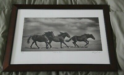 Kat Livengood Numbered 26/50 signed Horse photography 14x20 Framed Very nice