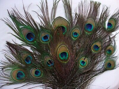 BULK BUY Natural Peacock Eye Feathers Wedding Crafts Costume Seconds Imperfect