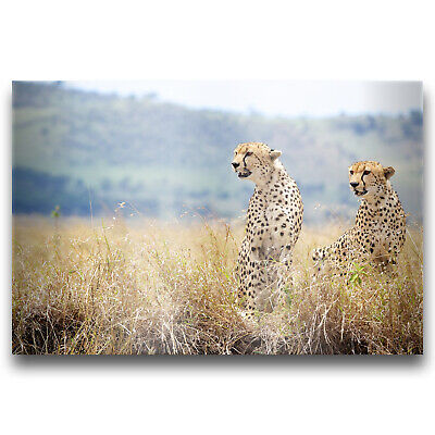 CHEETAH LYING Picture Poster Print Art A0 A1 A2 A3 A4 Animal Poster 3393