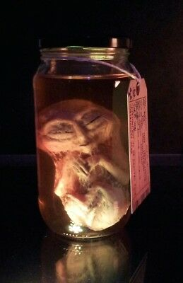 Alien Fetus / Embryo in Jar - UFO / Roswell / Area 51 / X Files. Not Sideshow