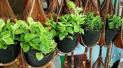 Rattan/bamboo plant hangers 10 pieces hand made FREE WORLD POST