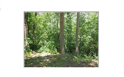 Michigan Land- Lot # 15 Creek Frontage- Across The Street From Maston Lake!!