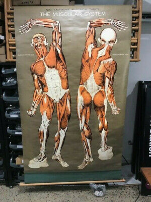 vintage set 10 frohse anatomical antique cloth canvas wall charts pulldown case