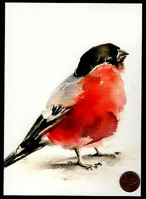 Bird With Red Chest Feathers Watercolor Large Blank Greeting Note Card NEW