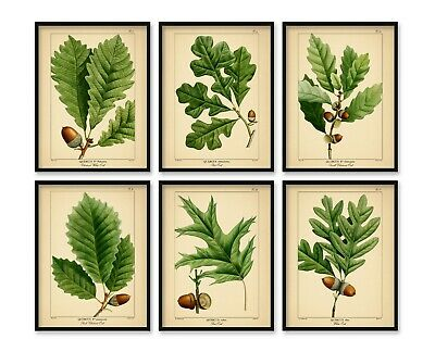 8x10'' prints Oak Acorn Tree Botanical Set Vintage Decor Art Green Gallery Wall