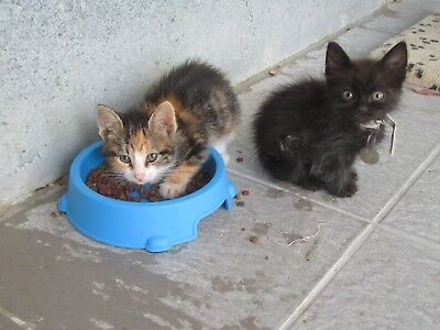 FEED A Cute CYPRUS Cat sanctuary CAT/KITTEN FOR CHARITY
