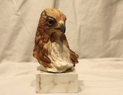 Red-Shouldered Hawk Sally Miller Modern Masters Limited Decorative Bird Bust