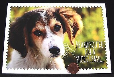 Adorable Little Puppy Dog Collie Posing  - Get Well Soon Greeting Card -- NEW