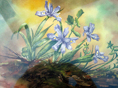 Original Framed Beautiful Colorful Iris Watercolor Painting Signed Dated 1985