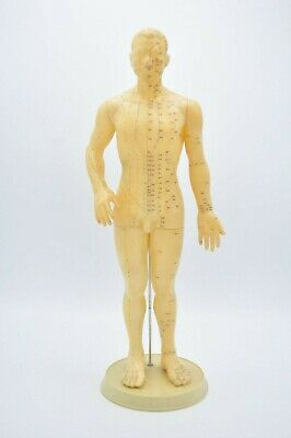 "Acupuncture Acupressure Model Chinese Rubber Male Figure Stand 20"" Figurine"