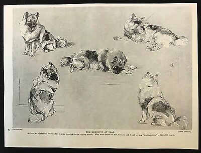 """1934 Dog Print / Bookplate - KEESHOND, The Keeshond at Play, """"Guelder Glom"""""""