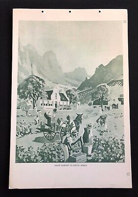 Vintage 1930s Poster School Chart Print GRAPE HARVEST IN SOUTH AFRICA No. 72