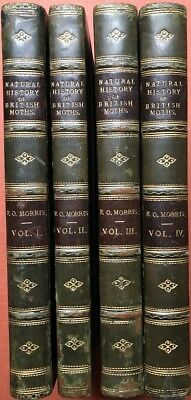 Rev F O Morris / Natural History of British Moths 4 volumes 1861-1870 1st ed