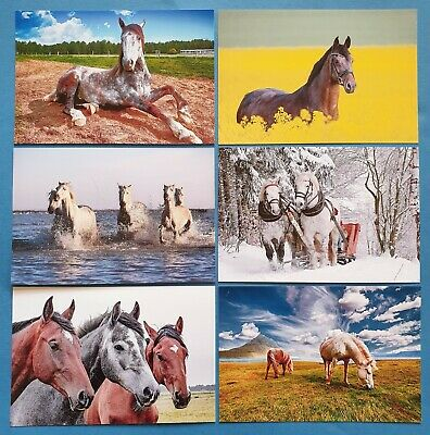 Quality Set of 6 Brand New Glossy Postcards, HORSES Horse 64O