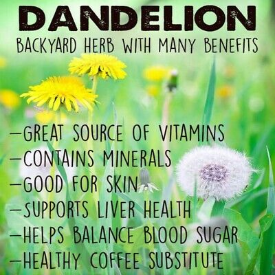 DANDELION ROOT POWDER Certified Organic Roasted Ground Non